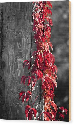 Creeper On Pole Desaturated Wood Print by Teresa Mucha
