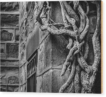 Creeper Wood Print by Steve Stanger