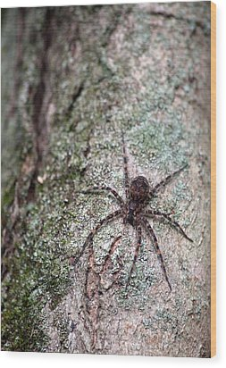Creepy Spider Wood Print by Karol Livote