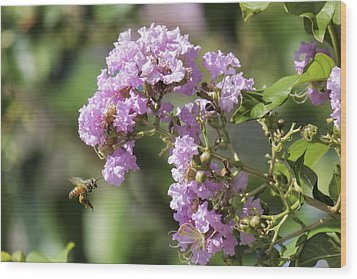 Crepe Myrtle And Honey Bee Wood Print by Jason Politte