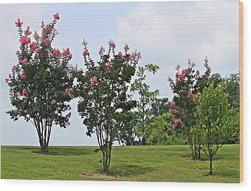Crepe Myrtle Trees Wood Print by Carolyn Ricks