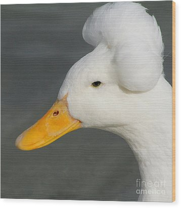 Wood Print featuring the photograph Crested Duck by Bob and Jan Shriner