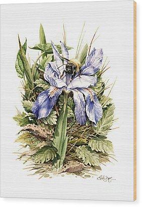 Crested Dwarf Iris Wood Print by Bob  George