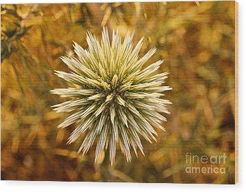 Cretan Flower Wood Print by David Warrington