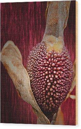 Crimson Canna Lily Bud Wood Print by Bill Tiepelman