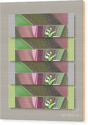 Wood Print featuring the photograph Crinum Lily Collage3 by Darla Wood