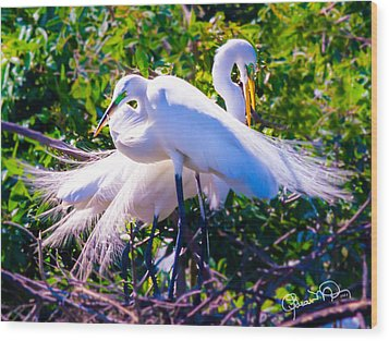 Criss-cross Egrets Wood Print