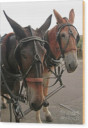 Mules In Harness -crocket And Tubbs Wood Print by Dodie Ulery