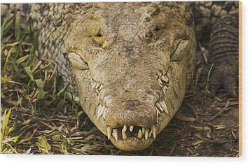 Crocodile Wood Print by Aged Pixel