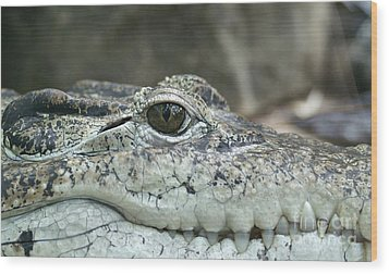 Wood Print featuring the photograph Crocodile Animal Eye Alligator Reptile Hunter by Paul Fearn
