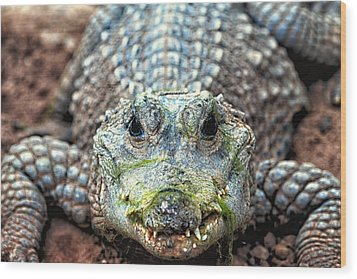 Crocodile Close-up Wood Print
