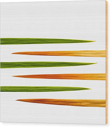 Crocosmia Leaves On White Background Wood Print by Carol Leigh