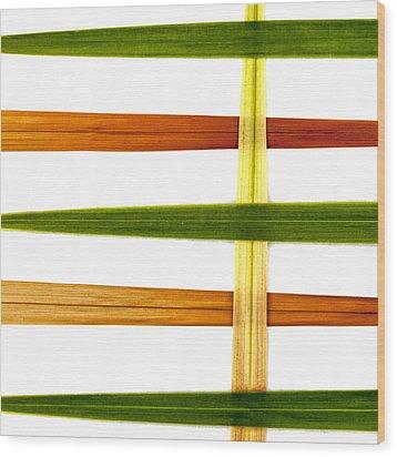 Crocosmia Leaves On White Wood Print by Carol Leigh