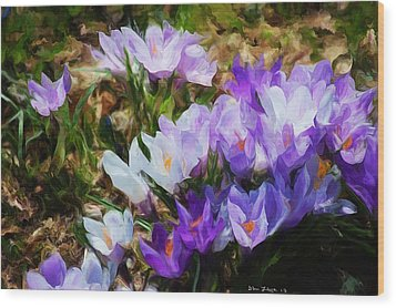 Crocus Fantasy Wood Print by David Lane