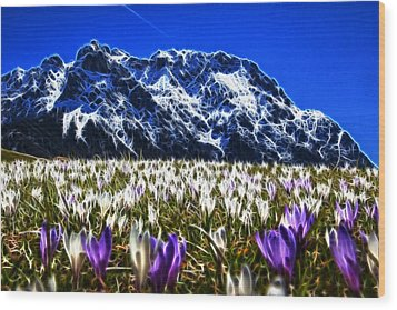 Crocus Meadow Wood Print