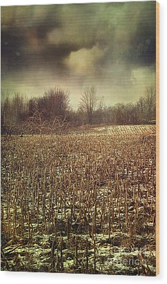 Crop Field In Early Winter After First Snow Wood Print by Sandra Cunningham