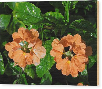 Wood Print featuring the photograph Crossandra by Ron Davidson