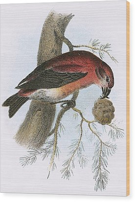Crossbill Wood Print by English School