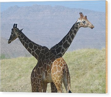Crossed Giraffes Wood Print by Phyllis Kaltenbach