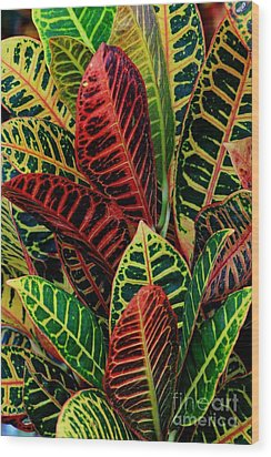 Croton Leafscape Wood Print by Larry Nieland
