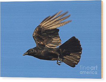Wood Print featuring the photograph Crow In Flight by Meg Rousher