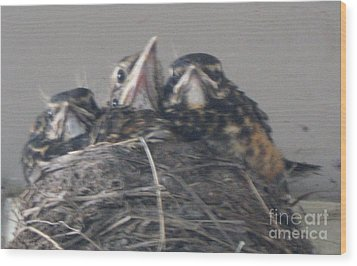 Wood Print featuring the photograph Crowded Nest by Wendy Coulson