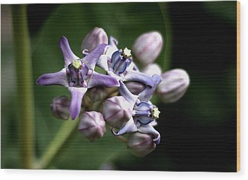 Wood Print featuring the photograph Crown Flower - Purple by Ramabhadran Thirupattur
