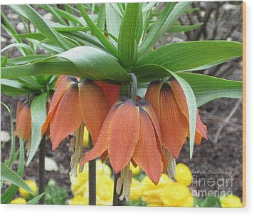 Crown Imperial Fritillaria Wood Print