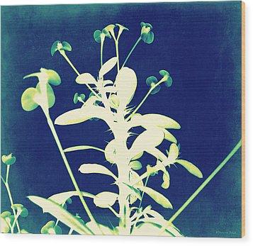 Crown Of Thorns - Blue Wood Print by Shawna Rowe