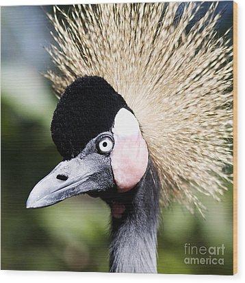 Crowned Heron 2 Wood Print