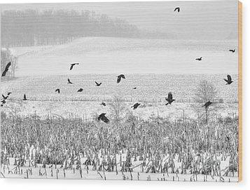 Crows In Cornfield Winter Wood Print by Dan Friend