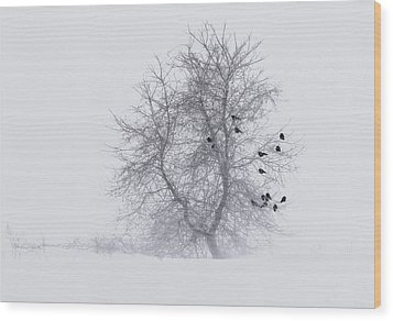 Crows On Tree In Winter Snow Storm Wood Print