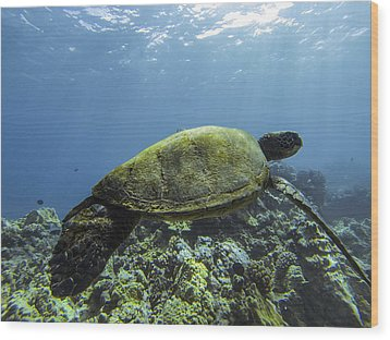 Cruising The Reef Wood Print by Brad Scott