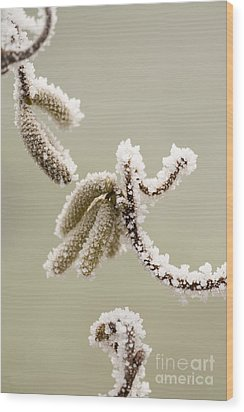 Crunchy Catkins Wood Print by Anne Gilbert