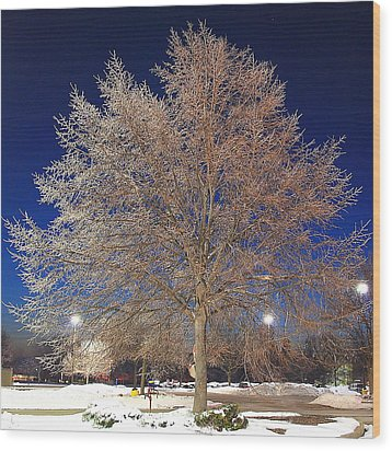 Crystal Tree Wood Print by Frozen in Time Fine Art Photography