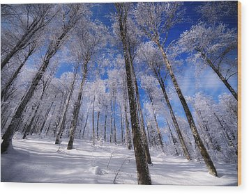 Wood Print featuring the photograph Crystal Vision by Philippe Sainte-Laudy