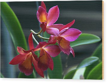 Ctna New River Orchid Wood Print