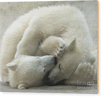 Cub Love Wood Print