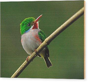 Cuban Tody Wood Print