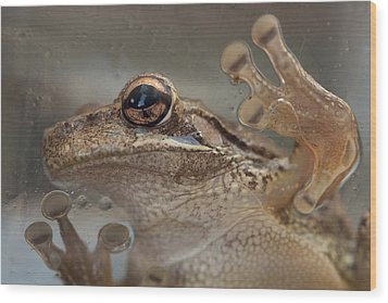 Cuban Treefrog Wood Print