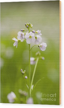 Cuckooflower Wood Print by Anne Gilbert