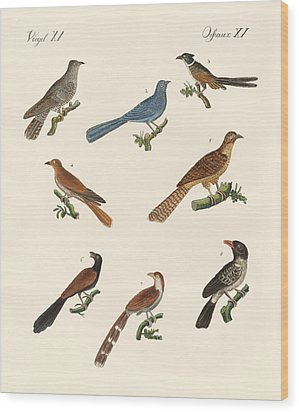 Cuckoos From Various Countries Wood Print by Splendid Art Prints
