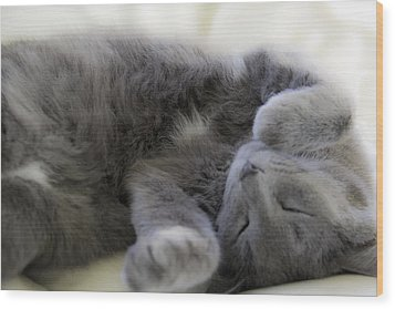 Cuddley Cat Wood Print