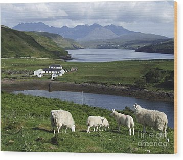 Cuillin Mountains - Isle Of Skye Wood Print