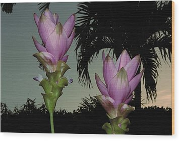 Wood Print featuring the photograph Curcuma Hybrid Flowers by Greg Allore