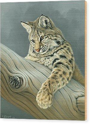 Curiosity - Young Bobcat Wood Print by Paul Krapf