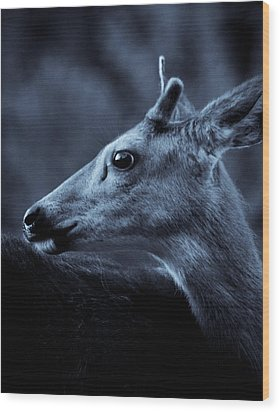 Wood Print featuring the photograph Curious  by Adria Trail