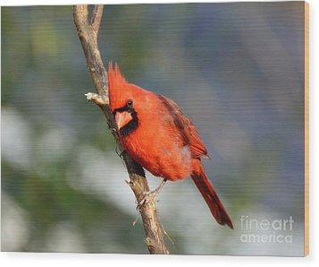 Curious Cardinal Wood Print by Lisa L Silva