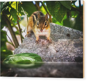 Curious Chipmunk  Wood Print by Bob Orsillo