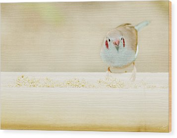 Curious Cordon Bleu Finch  Wood Print by Lisa Knechtel